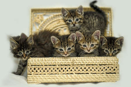 defenseless: many kittens in a basket Stock Photo