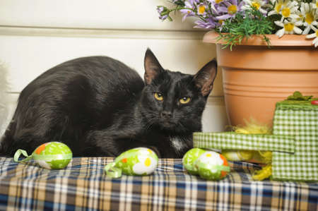 black cat and easter egg photo