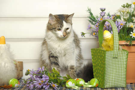 cat and easter egg photo