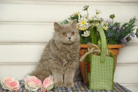 Cute Scottish kitten portrait Stock Photo - 19285218