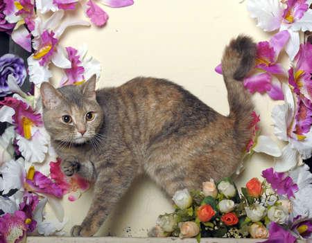 petunia wild: cat among the flowers