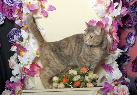 petunia wild: cat and flowers