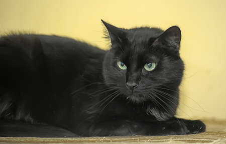 gato negro photo