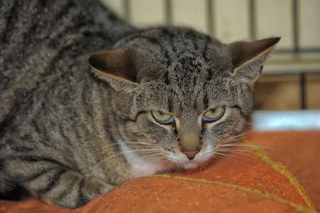 alert cat in a cage photo