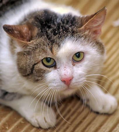 gran accidente gato asustado Foto de archivo