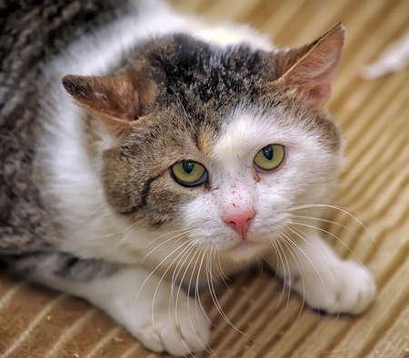 uneasy: big accident frightened cat