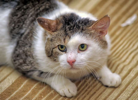animal abuse: big accident frightened cat
