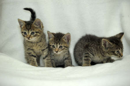 drowse: three striped kitten Stock Photo