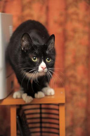 House Cat photo