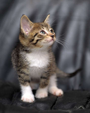 miaul: cute  kitten on a dark background Stock Photo