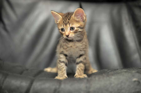 cute tabby kitten on a dark background photo