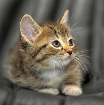 gato jugando: lindo gatito Foto de archivo