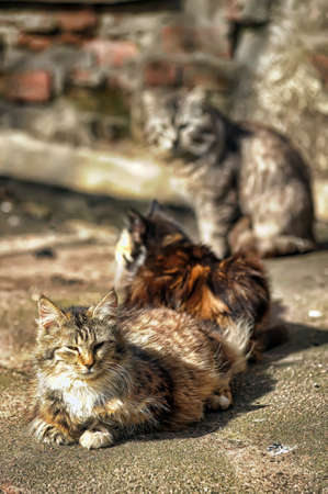 bask: three cats bask in the sun