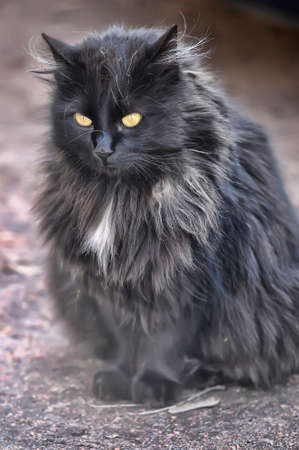 fluffy black cat in the street Stock Photo