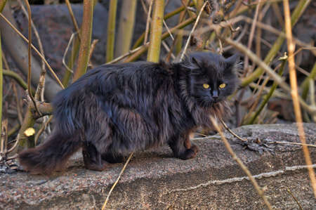 fluffy black cat in the street photo