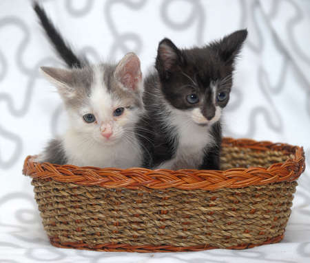 two kittens and a basket photo