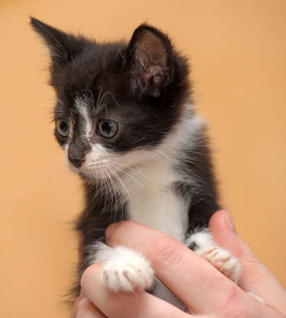 black and white kitten in her arms photo