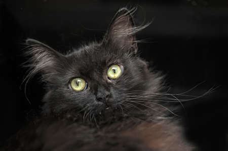 black cat on a black background photo