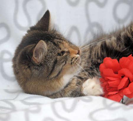 kitten with sick eyes Stock Photo - 19557832