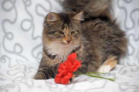 kitten with sick eyes Stock Photo - 19558088