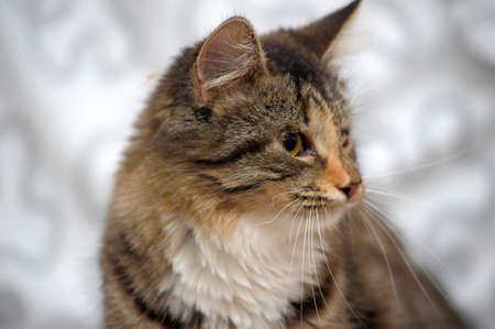 kitten with sick eyes Stock Photo - 19558129