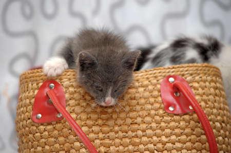 ear checked: kitten in a basket
