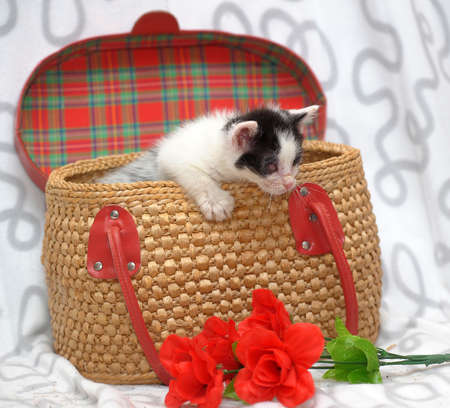 kitten in a basket Stock Photo - 19720131