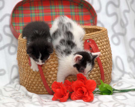 two kittens  photo