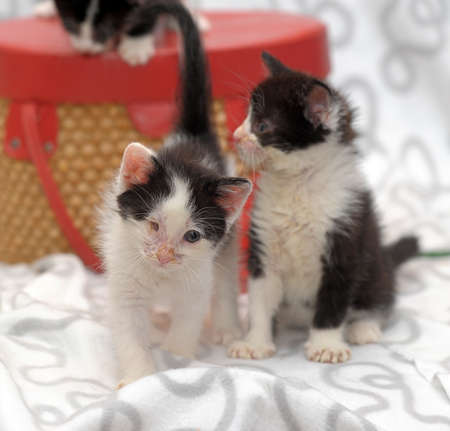 two kittens with sick eyes photo