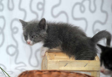 small kitten with diseased eyes rescued zoo defenders Stock Photo - 19578724