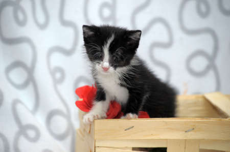 small kitten with diseased eyes rescued zoo defenders Stock Photo - 19578728