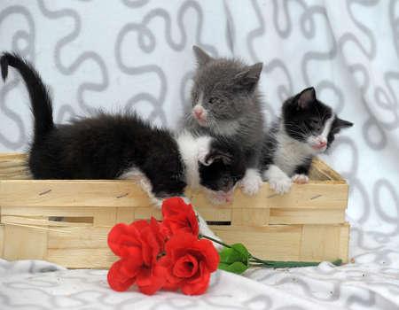 three kitten in a basket photo