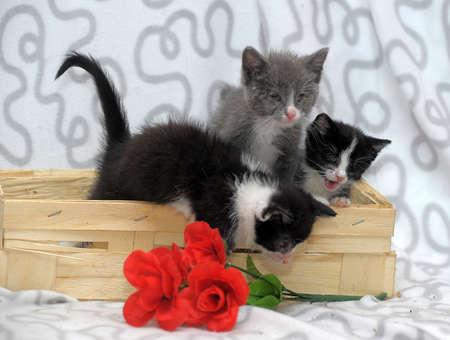 ear checked: three kitten in a basket