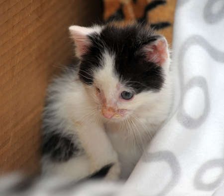 small kitten with diseased eyes rescued zoo defenders photo