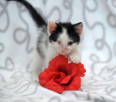 small kitten with diseased eyes rescued zoo defenders Stock Photo - 19577563