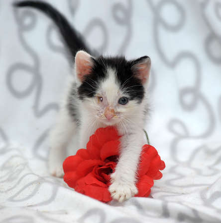 small kitten with diseased eyes rescued zoo defenders Stock Photo - 19577558