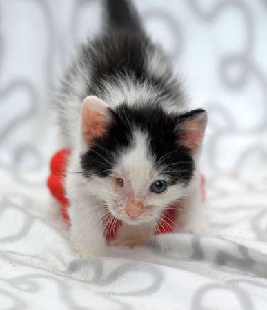 diseased: small kitten with diseased eyes rescued zoo defenders