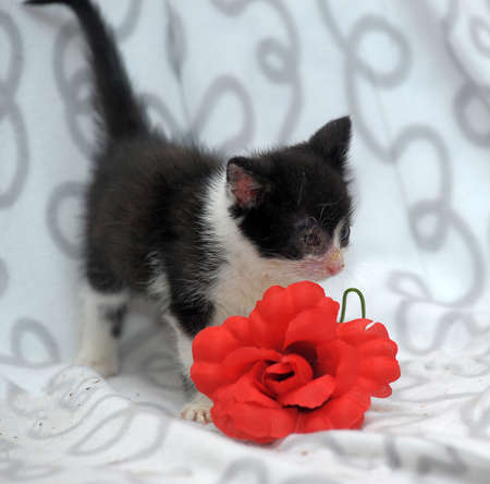 small kitten with diseased eyes rescued zoo defenders Stock Photo - 19605156