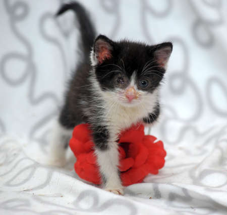 small kitten with diseased eyes rescued zoo defenders Stock Photo - 19577551