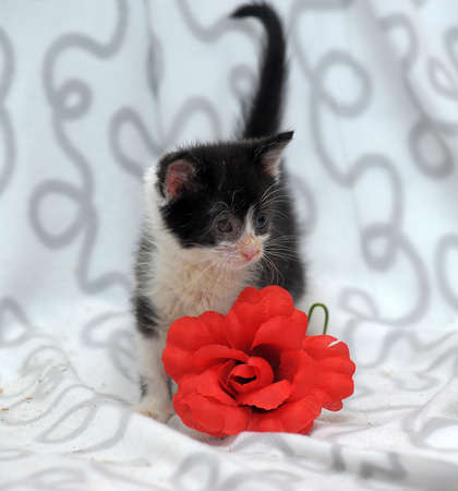 small kitten with diseased eyes rescued zoo defenders Stock Photo - 19577552