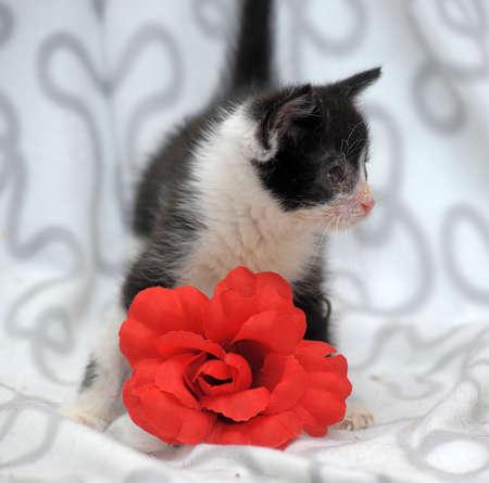 undomestic: small kitten with diseased eyes rescued zoo defenders