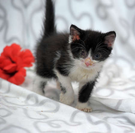small kitten with diseased eyes rescued zoo defenders Stock Photo - 19577557