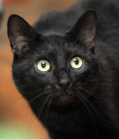 black cat with large expressive eyes photo