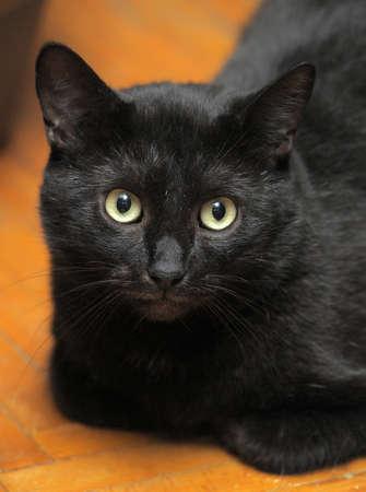 mesmerising: black cat with large expressive eyes