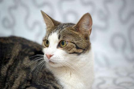 beautiful cat marble photo