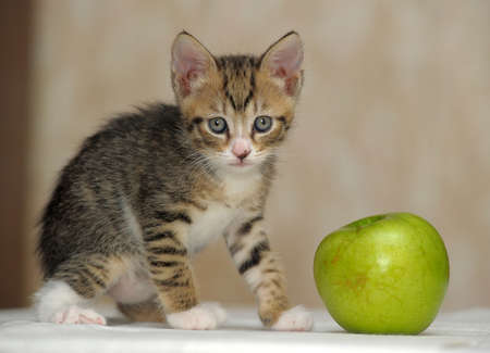 striped kitten and a green apple photo
