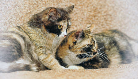 two cats twins photo
