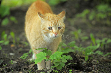 Cat take a walk on the grass close up Stock Photo - 21025556
