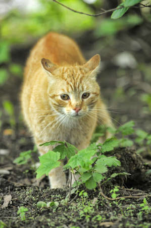 Cat take a walk on the grass close up Stock Photo - 21025557
