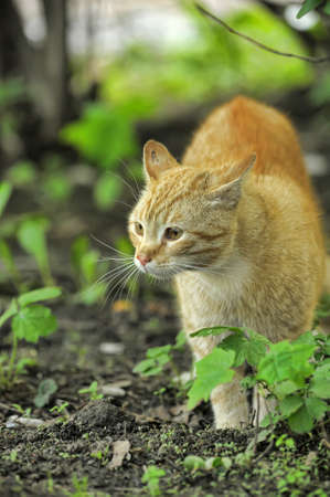 Cat take a walk on the grass close up Stock Photo - 21025558